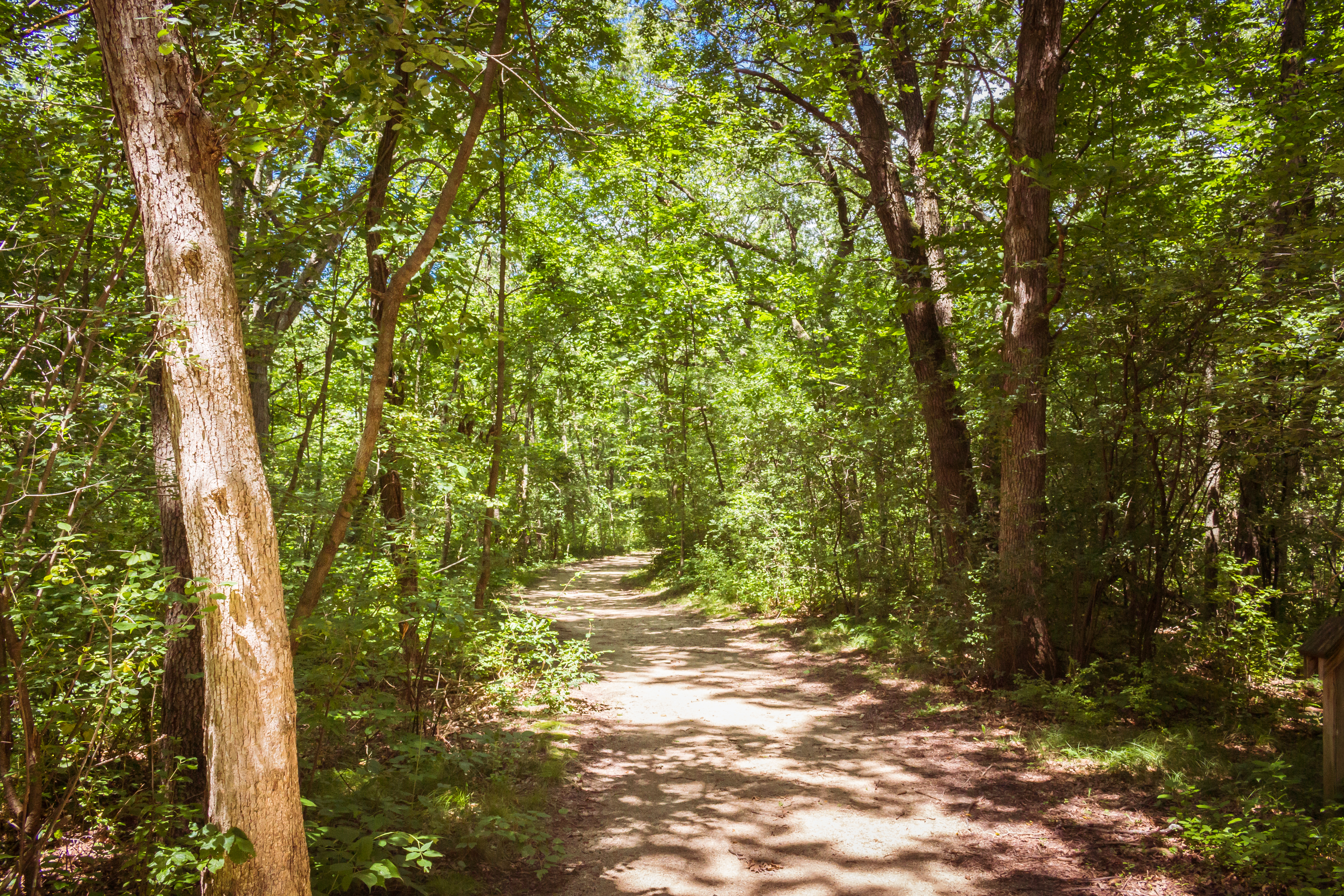 Discover Trail Running on the Ice Age Trail          in Janesville